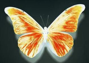 20111022130630-mariposa.jpg