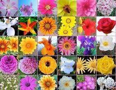 20140420200621-flores-de-bach.jpg